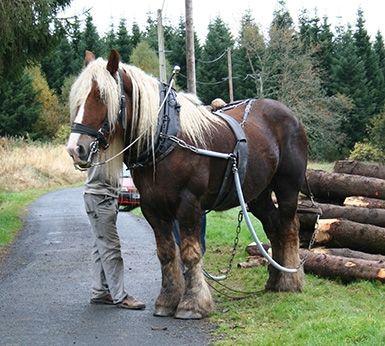 L'atelier de sellerie, le cheval de bataille de Jean-Yves Gallien !
