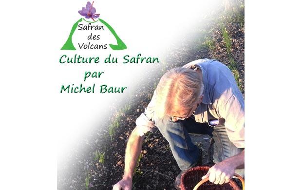 Le « Safran des volcans » : un produit labellisé bio, de qualité et d'exception