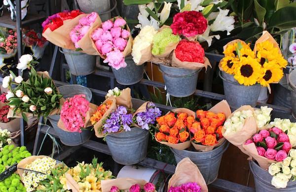 Arums et senteurs à Ainay-le-Château : pour le plaisir des fleurs
