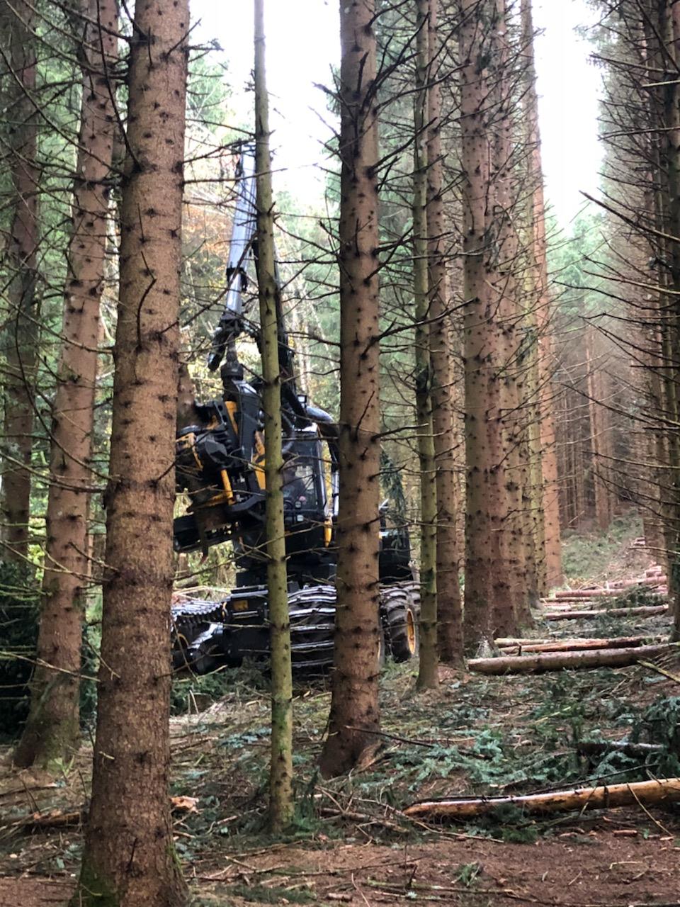 Concilier les exploitations forestières et le paysage