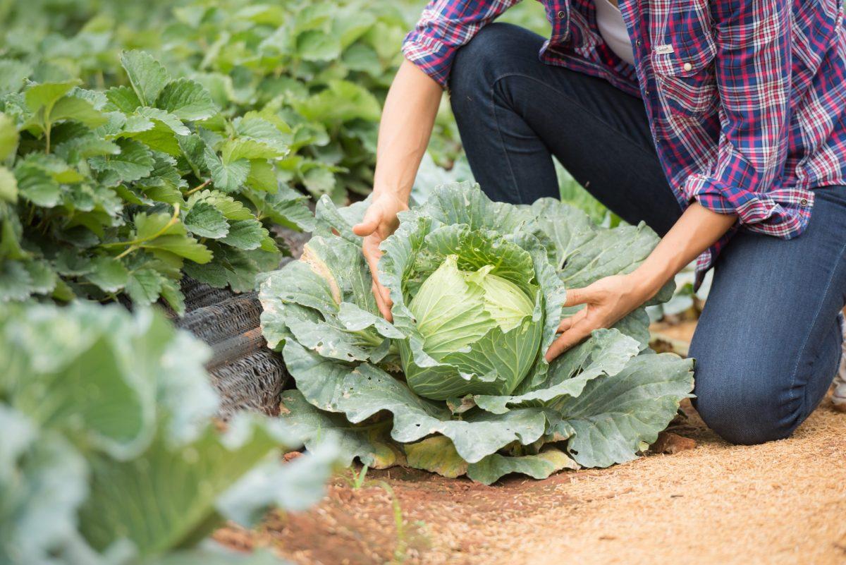 Mobilisation  | L'appel de la Région à soutenir l'agriculture régionale