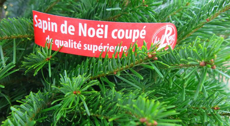 Sapin de Noël naturel français   Un charmeur très cultivé