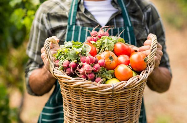 France Relance | Nouvel appel à projets pour l'alimentation