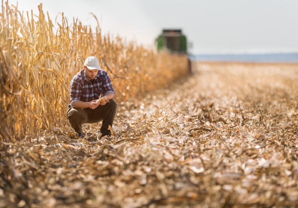Glyphosate   Des financements supplémentaires pour accompagner les agriculteurs
