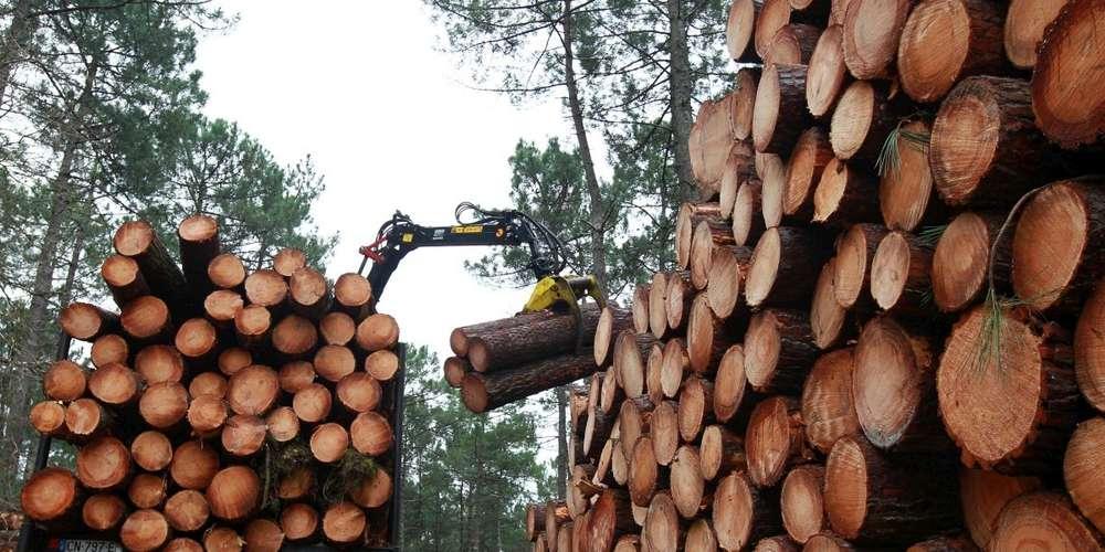 Filière bois | Le secteur s'engage pour sa neutralité carbone