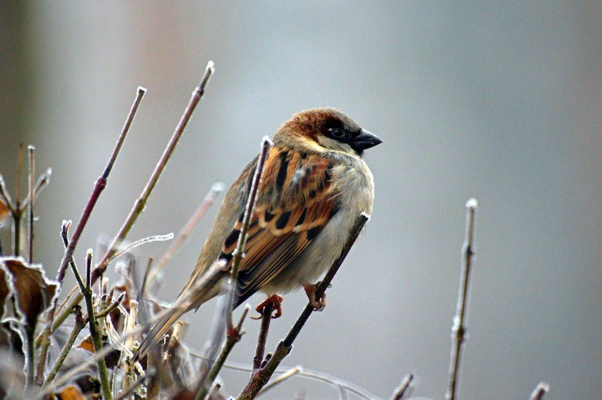 Nature | Inventaire des oiseaux à la mangeoire