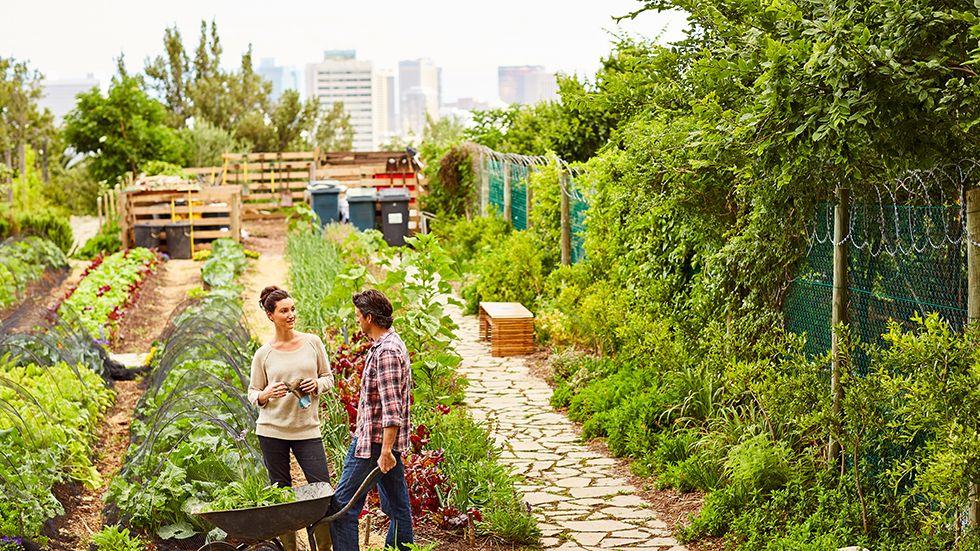 Jardins Partagés | Les financements France Relance désormais disponibles