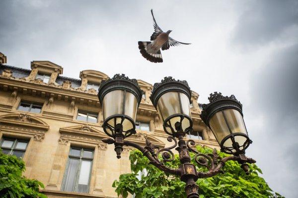 Paris | Pour que la biodiversité déploie ses ailes en ville