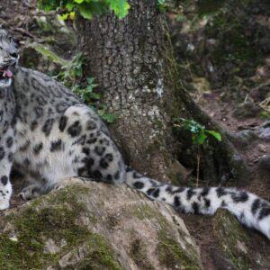 https://lejournaldeleco.fr/un-nouvel-elan-pour-le-parc-animalier-dauvergne/#.YKN0PJOA63I
