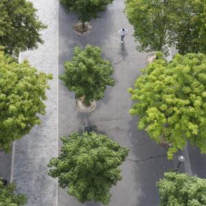 Nature | Zoom sur l'entretien des arbres de Paris