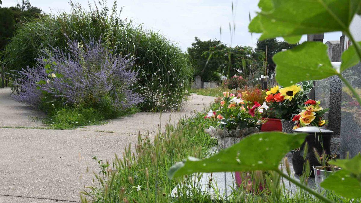 Biodiversité |Des cimetières labellisés par la LPO